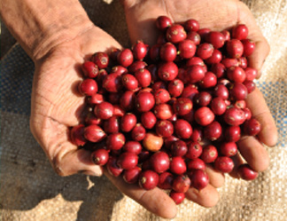 Coffee sector strives to increase exports