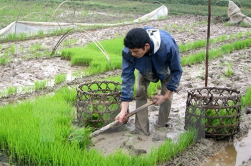 Agriculture promotes Hung Yen's socio-economic development