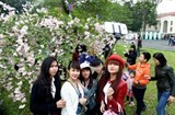 japan proposes giving 200 sakura trees to hanoi