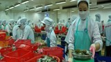 sharp cut in us anti dumping tariffs on vietnamese shrimp