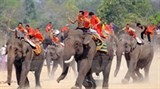dak lak elephant race attracts tourists