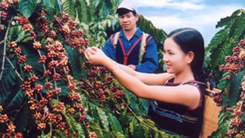 Vietnam- a global market leader for coffee