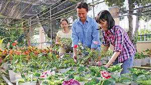 RoK supports Dong Thap's flower plantation for export