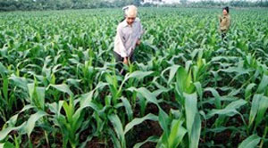 Vietnam eyes agricultural support from Japan