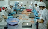 shrimp exports to china bring about great opportunity