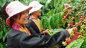 Vietnam coffee favoured in Singapore