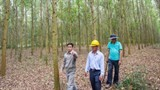 supporting sustainable forest plantations in vietnam