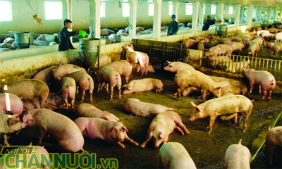 Vietnam sees rise in export of breeding products