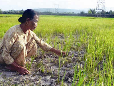 Gov't figures out measures to tackle saltwater intrusion, drought