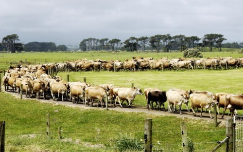 Services buoy up New Zealand economy amid dairy decline
