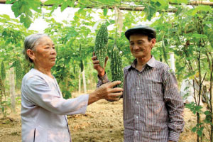 Ha Tinh focuses on new rural area construction