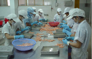 More opportunities for shrimp exports to US