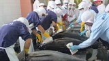 tuna industry failing on sustainability
