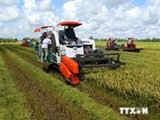 low carbon rice farming offers various benefits