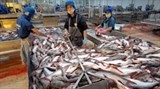 tra fish exports to the us fall