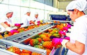 Vegetable, fruit exports up 13% in Q1