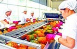 vegetable fruit exports up 13 in q1
