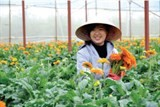 promoting da lat flower exports