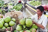 exports of vegetables fruits rise by 41