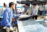 tuna exports enjoy busy early months