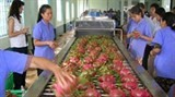 gcc holds great potential for vietnam fruit exports