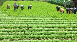 Hanoi looks to develop hi-tech agriculture