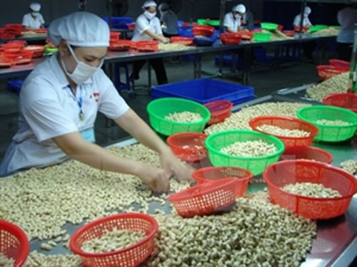 Cashew export value reaches 635 million USD