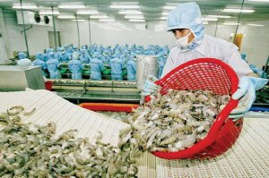 Bac Lieu: Over 8,300 tonnes of frozen shrimp exported