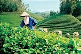 planning tea industry towards sustainable development