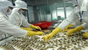 VASEP forecasts shortage of material shrimp