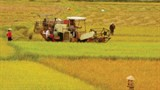 agriculture sector to enhance effectiveness of cooperatives