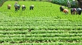 agriculture cooperatives failing to impress