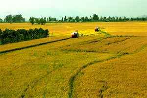 VN to create prominent rice brand