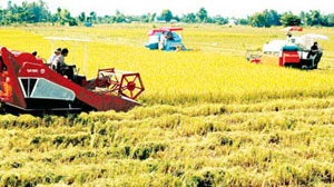 ASEAN agriculture and food forum to take place in Hanoi