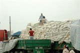 rice exports to africa to revive