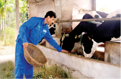 Hanoi continues large-scale concentrated breeding