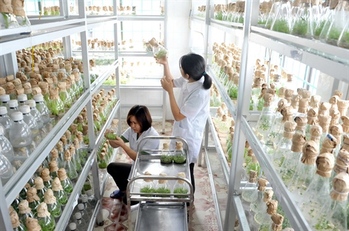 Quang Ninh wants investment in agriculture