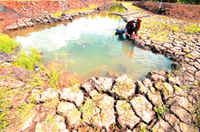Calling for int'l aid to cope with drought