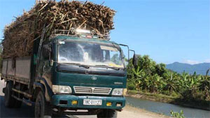 Sugar industry's death anticipated