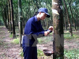 Wood, rubber businesses eye win-win cooperation