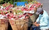 competitiveness of vietnam farm produce falling fast