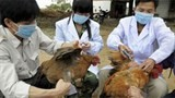 hong kong stops importing poultry products from vietnam