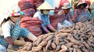 Chinese try to corner farm produce market in Vietnam