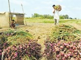 na urges change to agricultural sector