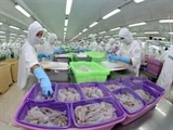 shrimp farmers achieve four star bap status