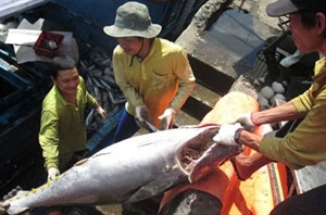Tuna value likely to drop in Q2