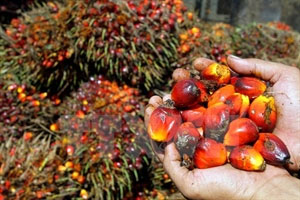 Malaysia: Palm oil exports increase sharply in May