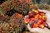 malaysia palm oil exports increase sharply in may