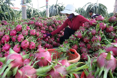 Fruit, vegetable exports grow in first five months