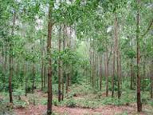 Quang Ngai benefits from reforestation project